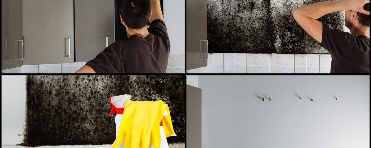 How to remedy mold